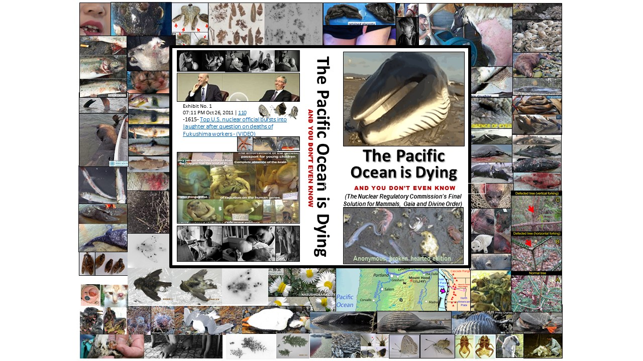 The Pacific Ocean Is Dying And You Don't Even Know Book Cover