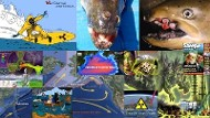 Center picture is photoshopped representation of actual three-eyed fish caught by fisherman for dinner in a reactor pond in Brazil. (ur) This diseased fish is not nuclear related but often is implied. When the four Fukushima nuclear reactors blew up and melted down into the water acquifirs feeding the Pacific Ocean, hundreds of tons of water a day containing plutonium and other radionuclides have flooded the Pacific Ocean 24x7x365 since 2011, and will continue to do so practically, for Eternity making the Pacific Ocean food chains extinct and killing the plankton that produce more than half of the world's oxygen.